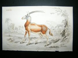 Jardine: 1835 The Algazel, Hand Col Print